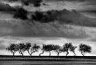 """""""Tańczące drzewa"""" - fot.Krzysztof Muskalski."""