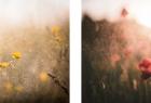 """cykl """"Barwne impresje III"""" - zdjęcia nr 2 i nr 3 - fot. Katarzyna Rojek."""