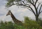 Zimbabwe-2011-466